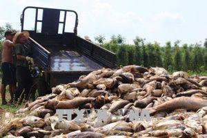 Cá chết đồng loạt ở Bình Phước do nuôi vượt gấp 5 lần