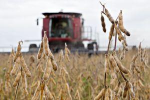 'Trung Quốc đã dừng mua đậu tương Mỹ để trả đũa thương mại'