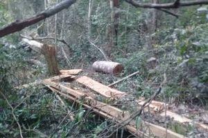 Kỷ luật 2 kiểm lâm và 3 cán bộ bảo vệ rừng