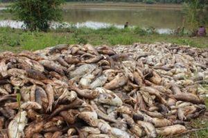 Bình Phước: Cá chết trắng bụng trong đập Bình Hà 1 do thiếu oxy?