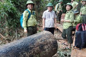 Rừng tan hoang, hạt trưởng kiểm lâm ở Quảng Nam mất chức