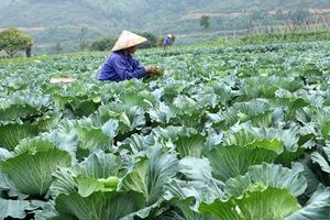 Lào Cai: Hiệu quả phát triển kinh tế từ các công trình thủy lợi
