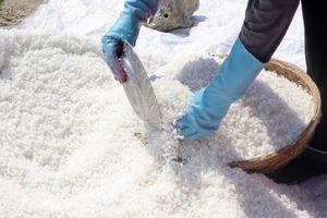 Muối được mùa rớt giá, diêm dân Phú Yên gặp khó