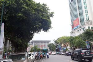 Dịch chuyển 175 cây xanh phục vụ thi công tuyến đường sắt đô thị đoạn Nhổn - Ga Hà Nội