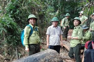 Quảng Nam: Cách chức, kỷ luật nhiều cán bộ ngành kiểm lâm