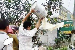 Nghệ An: Người nông dân đổ sữa tươi lênh láng tại điểm thu mua