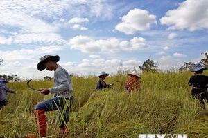 Thái Lan hỗ trợ hơn 50 triệu USD xây kho chứa gạo để ổn định giá