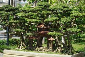 Chiêm ngưỡng 500 cây cảnh, bonsai cực quý hiếm tại Hà Nội