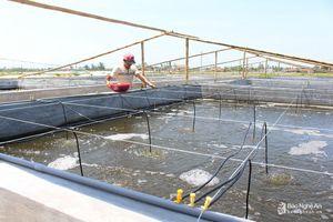 Nông dân Quỳnh Lưu đầu tư chống nóng cho tôm