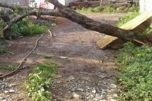 Clip: Dông lốc kinh hoàng ở Sơn La cuốn tung hàng chục mái nhà