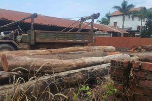 Vụ trùm gỗ lậu Phượng 'râu': Làm rõ trách nhiệm cán bộ