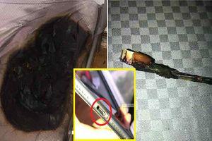 Cắm sạc iPhone 8 trước khi đi ngủ, tỉnh dậy, cô gái thất kinh khi thấy nệm bị cháy đen, khét lẹt
