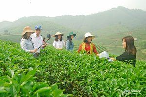 Du lịch canh nông - tiềm năng và kỳ vọng của Nghệ An