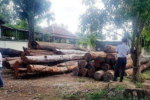 Vụ bắt giữ trùm gỗ lậu Phượng 'râu': Tạm đình chỉ 1 cán bộ bảo vệ rừng