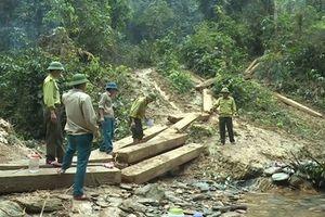 Quảng Bình: Kỷ luật hàng loạt cán bộ Kiểm lâm để mất rừng