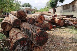 Đề nghị thanh tra, điều tra các tụ điểm phá rừng
