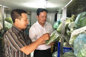 Sản xuất rau sạch, không lo đầu ra