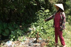Tam Kỳ (Quảng Nam): Người dân bức xúc vì ô nhiễm trên tuyến kênh N2 không được giải quyết dứt điểm