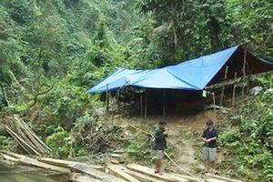 Quảng Bình: Để mất rừng 5 cán bộ kiểm lâm bị kỷ luật