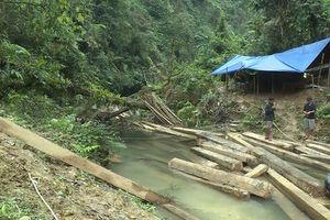 Kỷ luật 5 cán bộ kiểm lâm liên quan vụ phá rừng quy mô lớn tại Quảng Bình
