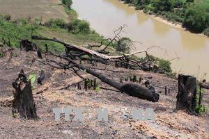 Đắk Lắk: Nhiều diện tích rừng Khu Bảo tồn thiên nhiên Nam Kar bị 'cạo trọc'