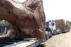 Gia cố cầu để vận chuyển cây 'khủng' xuyên Việt?