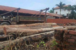 Vụ phá đường dây gỗ lậu của Phượng 'râu': 9 cán bộ kiểm lâm bị kỷ luật