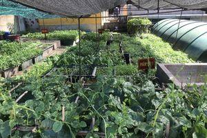 Mãn nhãn với vườn rau xanh, cây trái trĩu trịt trên các đảo Trường Sa