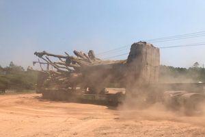 Lãnh đạo Sở GTVT hiến kế 'giải cứu' 3 cây đa khổng lồ