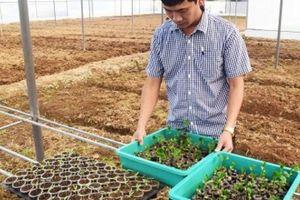 Cán bộ địa chính 'tay trái' trồng tiêu, lập HTX rau công nghệ cao
