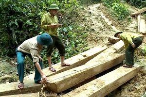 Để phá rừng rồi kỷ luật - không phải như vậy là xong!
