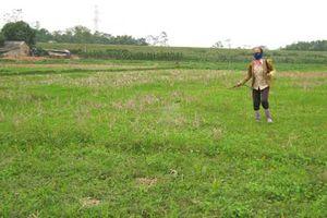 Ngộ độc thuốc diệt cỏ
