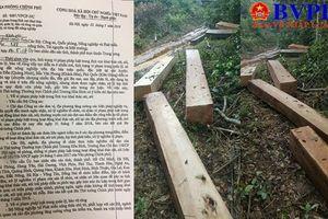 Quảng Trị: Rừng phòng hộ vẫn bị tàn phá ghê gớm bất chấp 'công lệnh' của Phó Thủ tướng