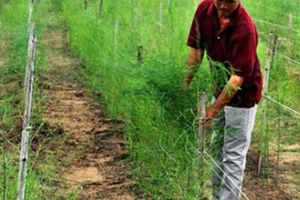 Chủ tịch Hội NDVN: Tập huấn quy trình canh tác bền vững cho ND tại ruộng