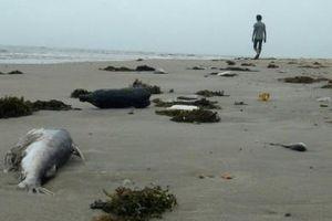 Hà Tĩnh: Quan làng 'ăn' tiền bồi thường sự cố môi trường biển bị khởi tố
