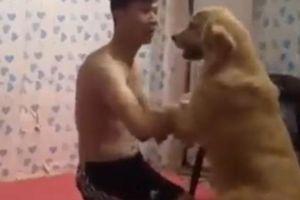 Clip: Chú chó lăn xả ngăn cản chồng đánh vợ gây sốt mạng