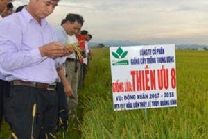 Nông dân vựa lúa Lệ Thủy 'kết' giống lúa Bắc Hương 9 và Thiên Ưu 8