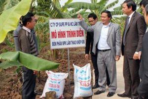Supe Lâm Thao tung 'chiêu' bảo vệ thương hiệu trước phân bón giả