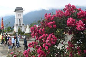 Đây mới là vườn hồng rực rỡ nhất Sa Pa