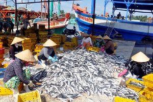 Đà Nẵng: Tiến hành thanh tra, kiểm soát nghề cá