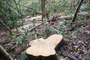 Quảng Trị lập chốt chặn cấp tỉnh ngăn 'chảy máu' rừng