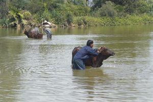 Quảng Ngãi: Hai học sinh đuối nước