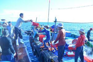 Đà Nẵng kiểm soát nghề cá theo hướng dẫn của Ủy ban Châu Âu