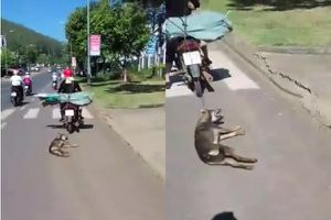 Buộc chó vào đuôi xe máy rồi kéo lê quãng đường dài để... đi dạo