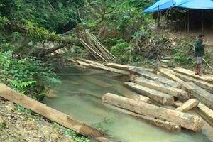Để rừng 'chảy máu', Phó Chủ tịch huyện Tuyên Hóa bị kỷ luật