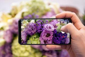Asus chính thức bán ZenFone 5 tại Việt Nam, giá 7,99 triệu đồng