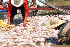 Dùng thuyền chở hàng trăm tấn cá chết trên sông La Ngà đem ủ phân