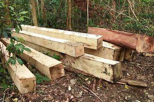Khởi tố vụ phá rừng ở xã Ia Sao