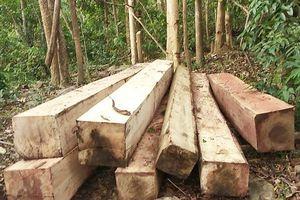 Khởi tố hình sự vụ án khai thác gỗ trái phép tại núi Chư Jú