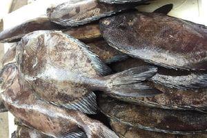 Tiêu hủy 780 kg cá rìa đông lạnh nhập lậu